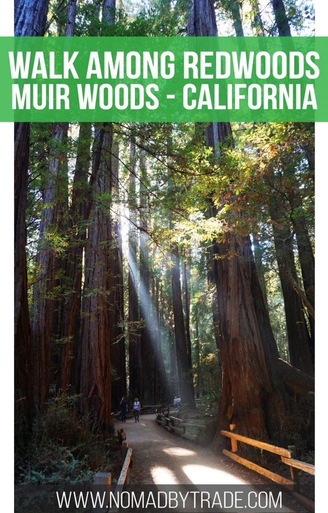 Experience the magnificence of redwood trees just minutes from San Francisco, California in Muir Woods National Monument.