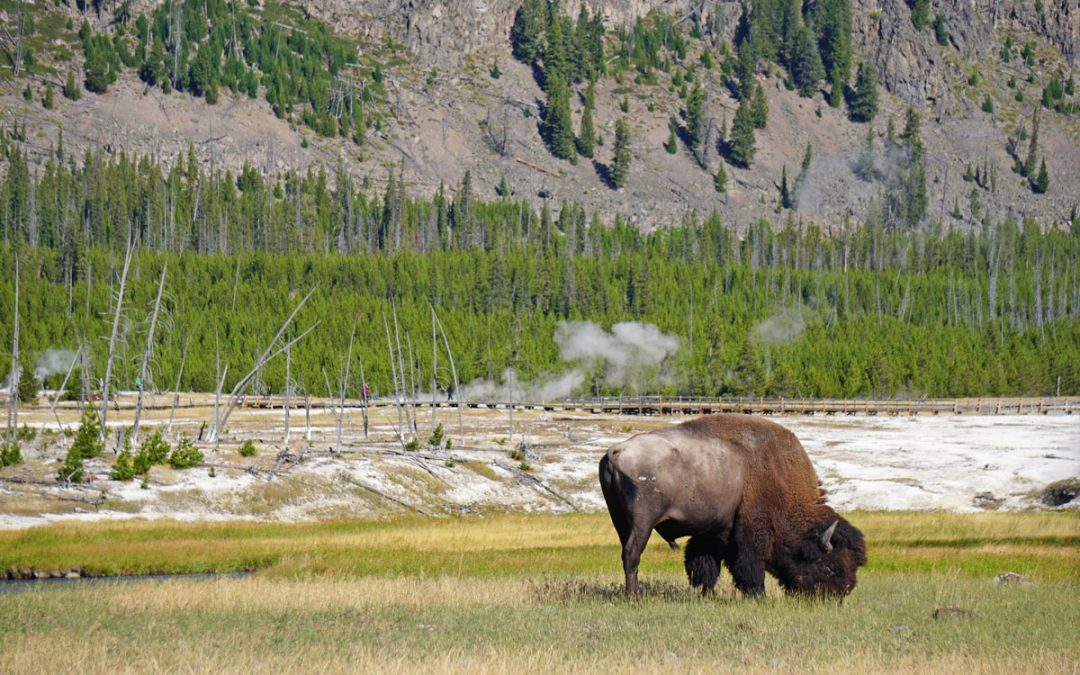 Where to Stay in Yellowstone National Park