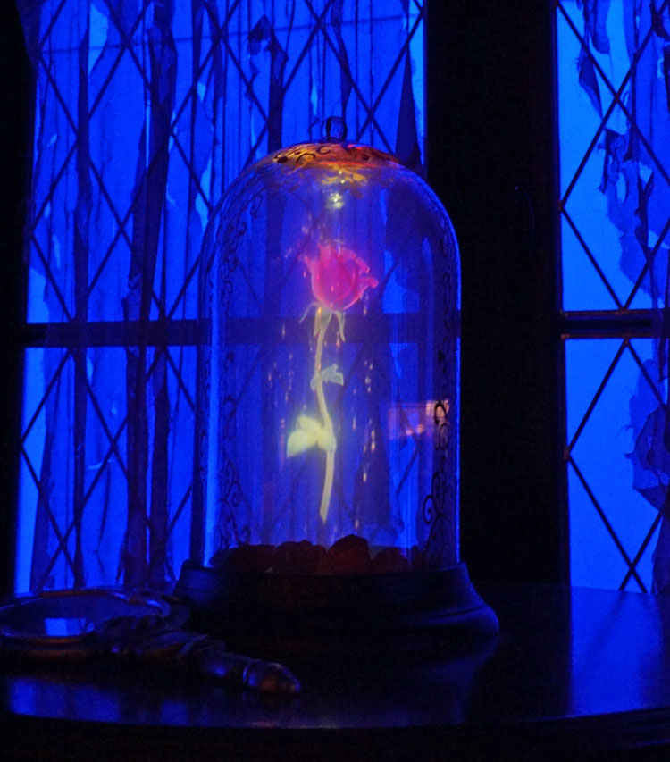 Enchanted rose on display in the West Wing room at Be Our Guest restaurant