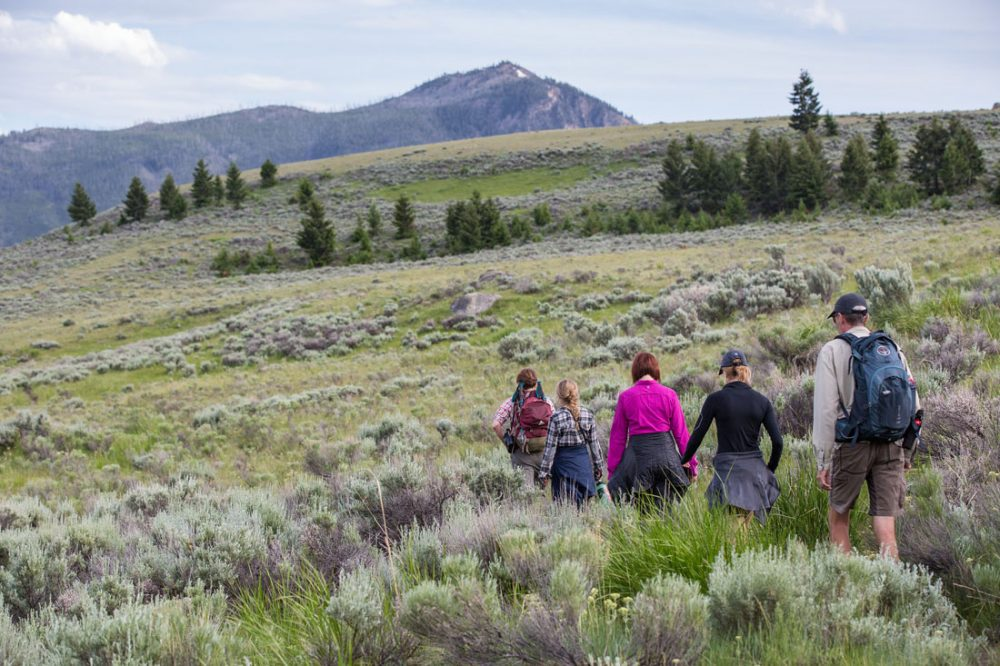 Four hikers walk through knee-high grass in a wide meadow with small trees and mountain peaks in the background