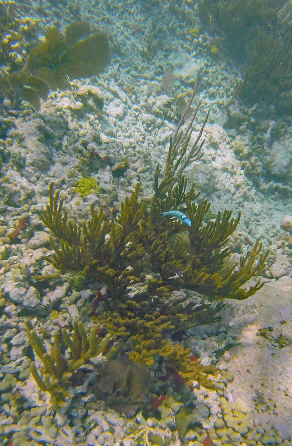 Colorful fish swimming above coral