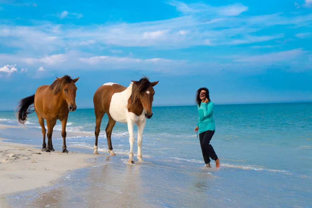 Woman on a beach with two wild horses on Assateague Island