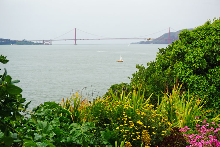 Flowers in an inmate garden on Alcatraz with the Golden Gate Bridge in the distance