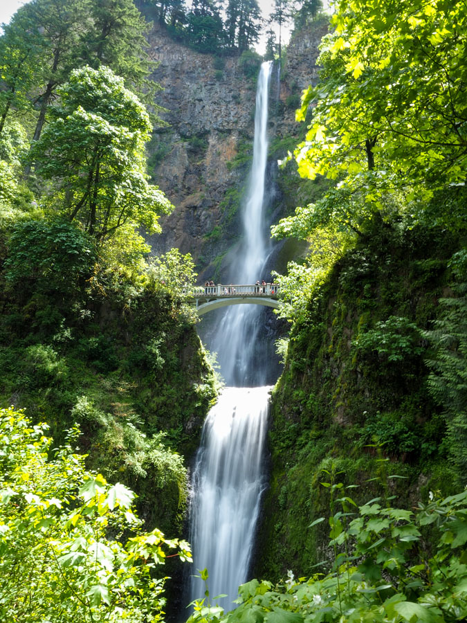 Two tiered waterfall Multnomah Falls cascading under a bridge surrounded by green foliage