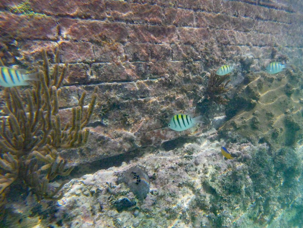 Colorful tropical fish and coral in Dry Tortugas National Park