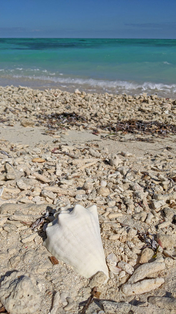 Large seashell and coral pieces on the beach in Dry Tortugas National Park