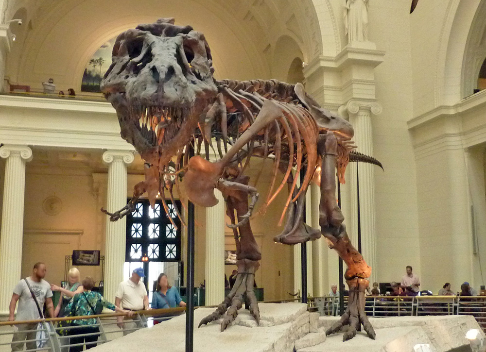 T-rex skeleton at the Field Museum in Chicago - Midwest travel