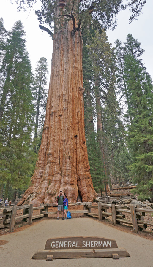 Couple standing in front of the General Sherman tree in Sequoia National Park