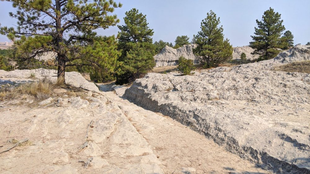 Ruts carved into greyish stone near pine trees on a remnant of the Oregon Trail