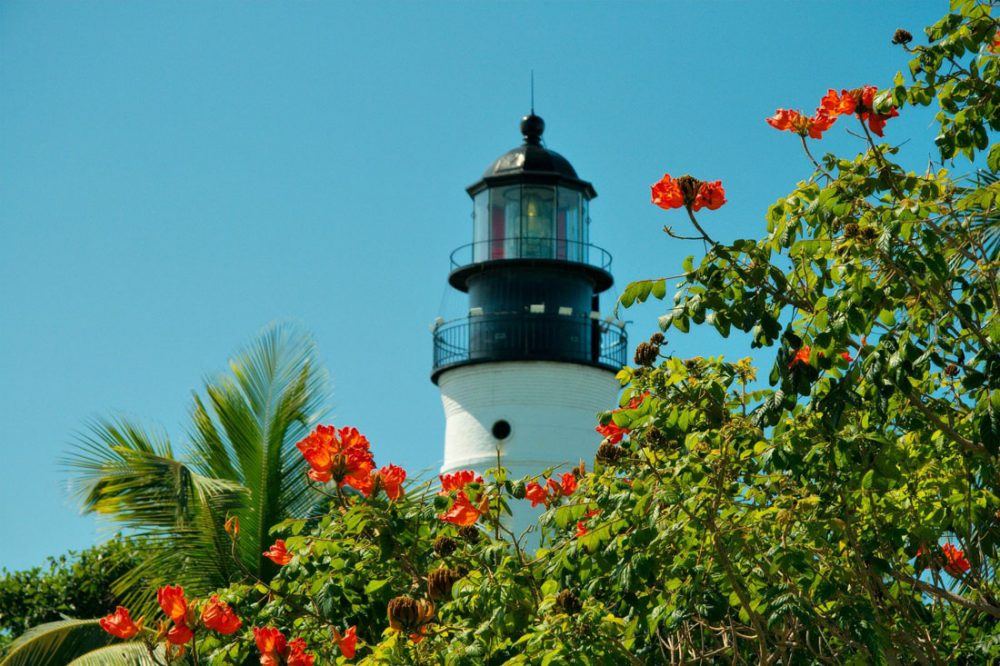White brick lighthouse with a black top with trees with bright red flowers in the foreground