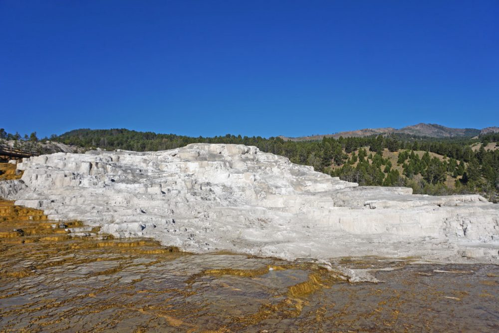 Bright white terraces at Mammoth Hot Springs