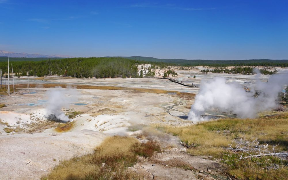 Steam coming from fumaroles and hot springs in Norris Geyser Basin