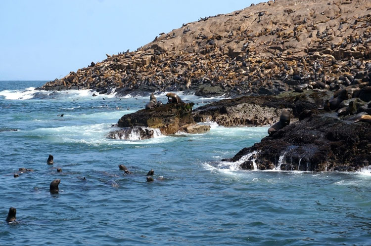 Sea lions on the rocky shores of the Palomino Islands, visited on a day trip from Lima