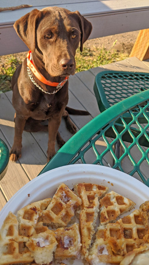 Dog seated beside a table begging for food
