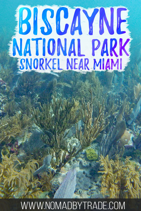 """Colorful coral with text overlay reading """"Biscayne National Park snorkel near Miami"""""""