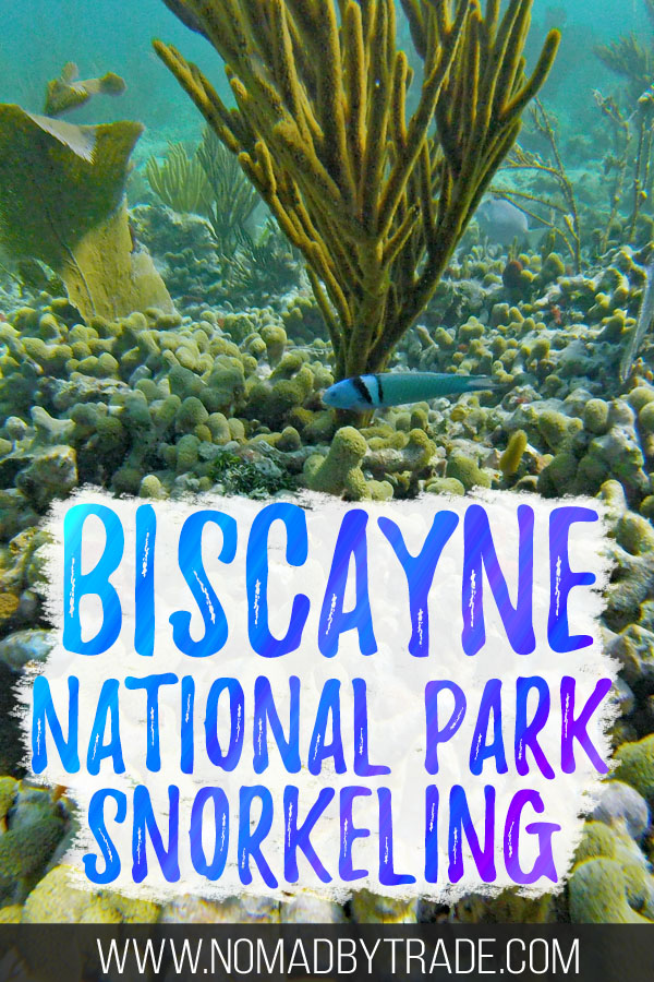 """Colorful fish and coral with text overlay reading """"Biscayne National Park snorkeling"""""""