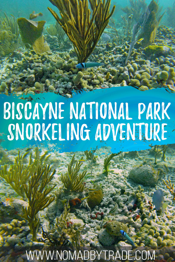 """Collage of coral and fish with text overlay reading """"Biscayne National Park snorkeling adventure"""""""