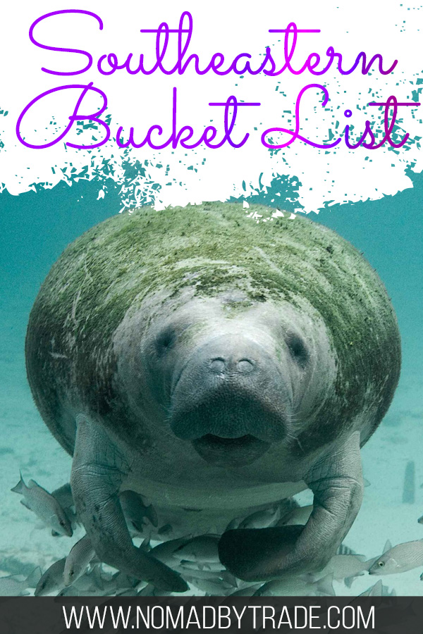 """Swimming manatee with text overlay reading """"Southeastern Bucket List"""""""