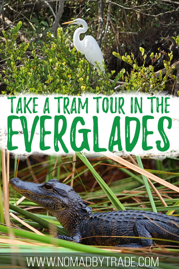 """Photos of wildlife with text overlay reading """"take a tram tour in the Everglades"""""""