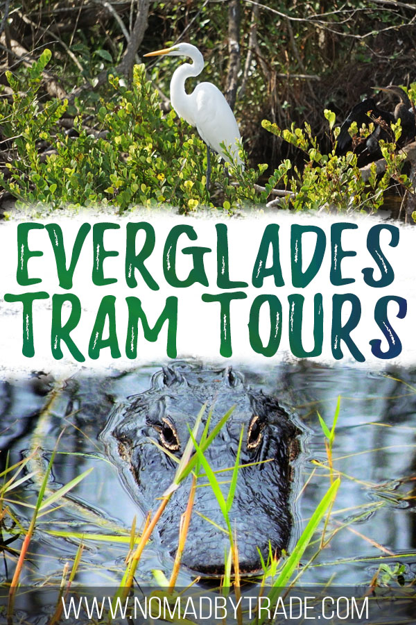 """Photos of wildlife with text overlay reading """"Everglades tram tours"""""""