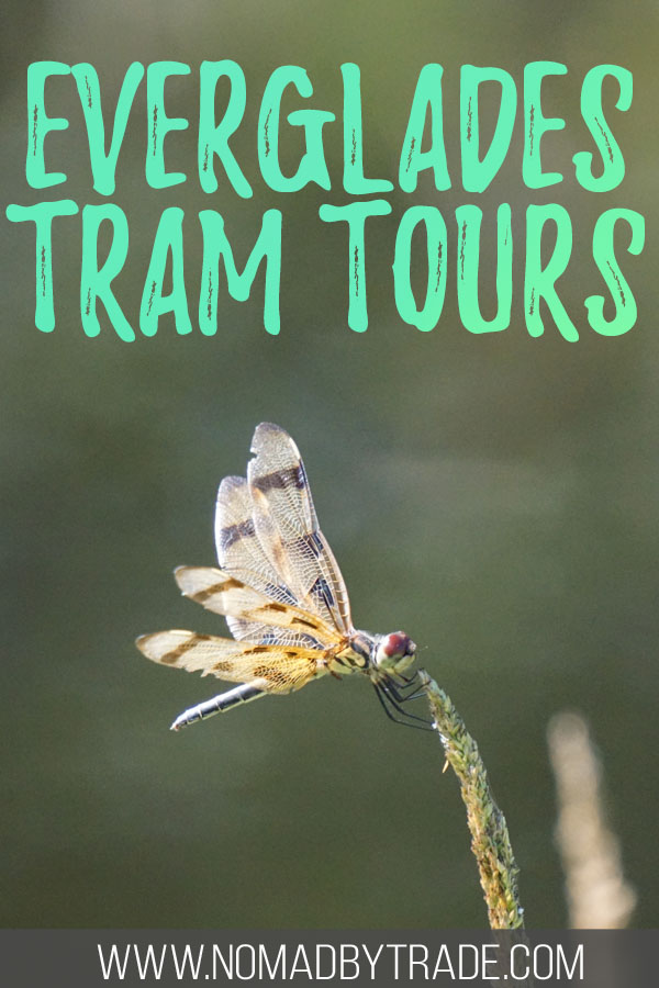 """Photo of a dragonfly with text overlay reading """"Everglades tram tours"""""""