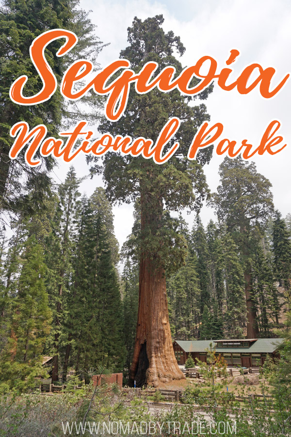 """Giant sequoia tree wit text overlay reading """"Sequoia National Park"""""""