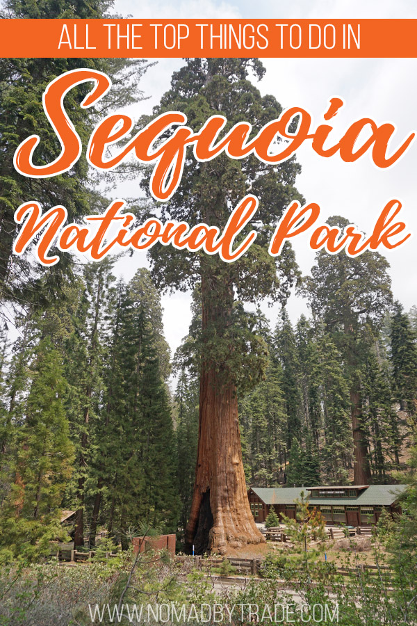 """Sequoia tree in front of the Giant Forest Museum with text overlay reading """"All the best things to do in Sequoia National Park"""""""