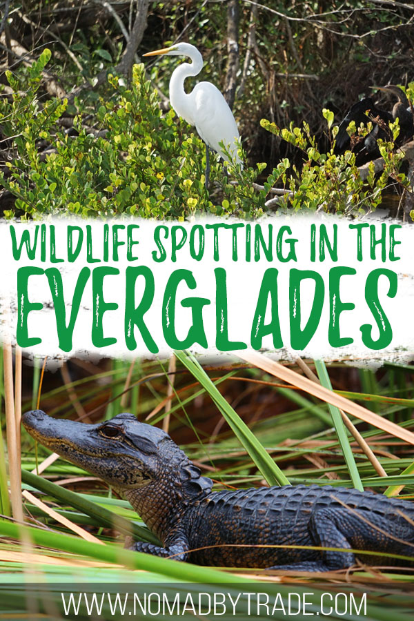 """Photos of wildlife with text overlay reading """"Wildlife spotting in the Everglades"""""""
