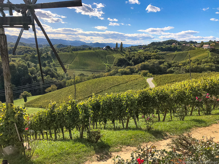 Vineyard along the South Styrian Wine Road in Austria
