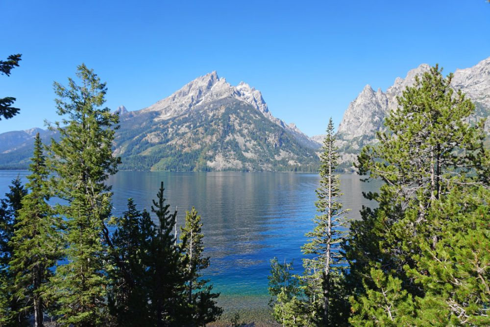 Blue mountain lake visible between pine trees with a tall mountain peak in the background