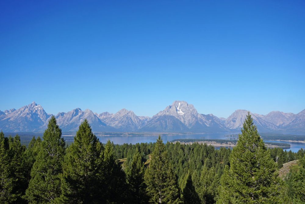 View of the Grand Tetons in the background with pine trees in the foreground taken from the top of Signal Mountain