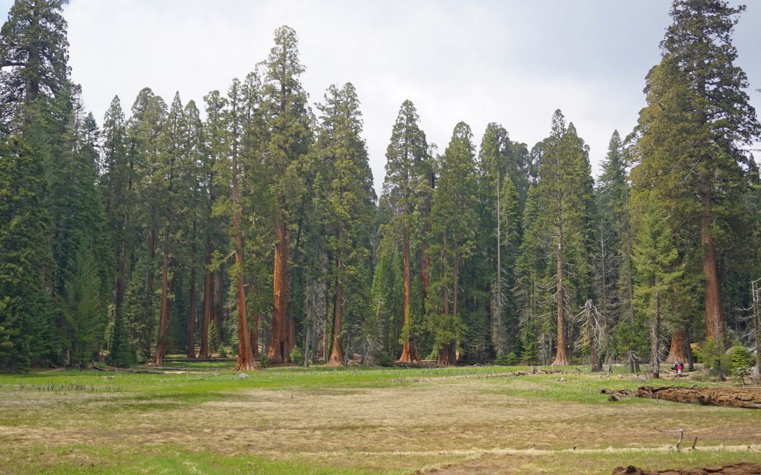 All the Best Things to Do in Sequoia National Park