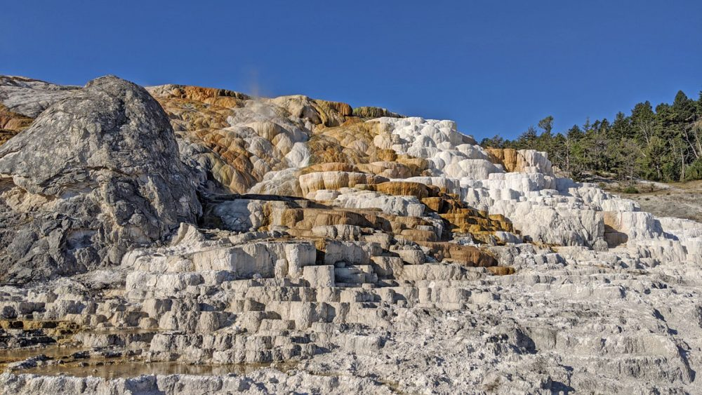 White and brown terraces at Mammoth Hot Springs