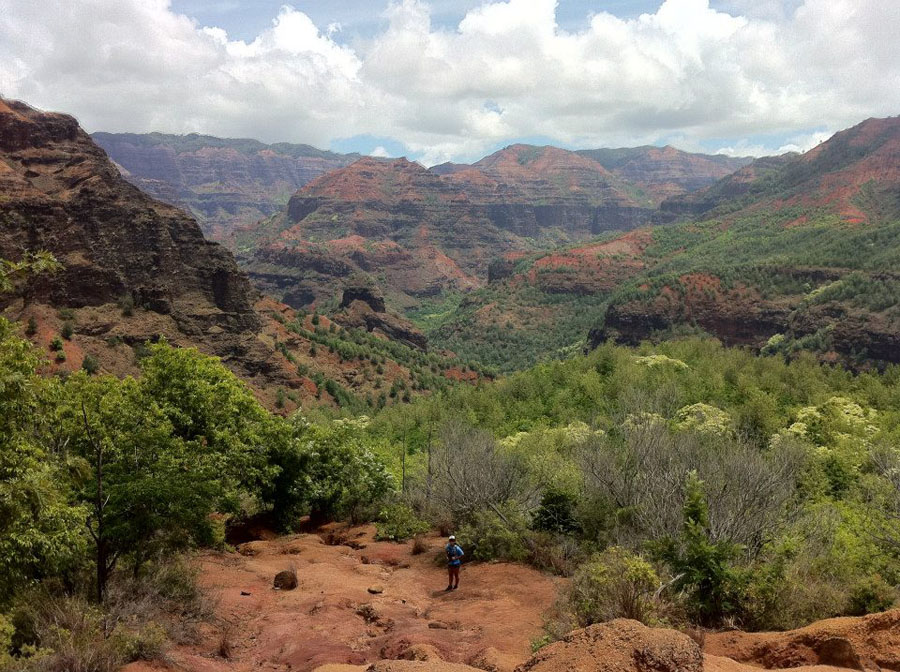 View of Waimea Canyon with deep red gorges and green foliage